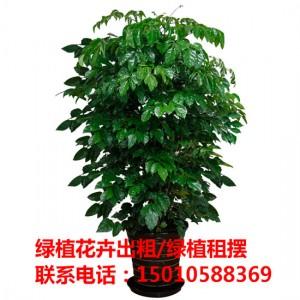 北京绿植花木盆栽租赁公司 北京绿植花木盆栽租赁供应商