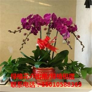 北京绿植花木盆栽租赁供应商 北京绿植花木盆栽租赁公司