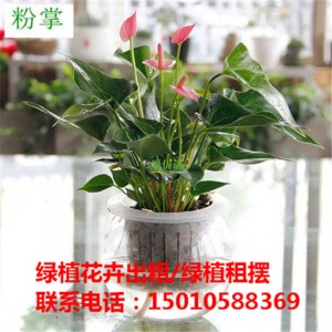 北京水培绿植花卉租赁供应商 北京水培绿植花卉租赁公司