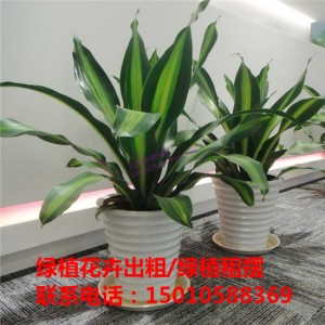 北京中型绿植花卉租摆公司 北京中型绿植花卉租摆供应商