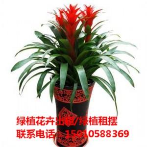 北京中型绿植花卉租摆供应商 北京中型绿植花卉租摆公司