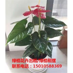 北京小型绿植花卉租摆公司 北京小型绿植花卉租摆供应商