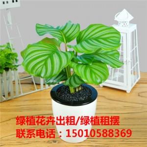 北京小型绿植花卉租摆供应商 北京小型绿植花卉租摆公司