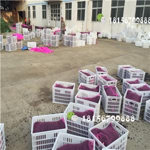 安徽凤丹种子批发基地 亳州凤丹种子育苗场