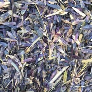 板蓝根种子专业种植