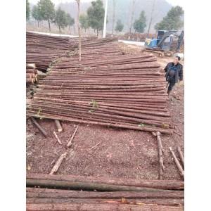 绿化支撑杆、打桩原木