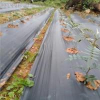 山豆根种植
