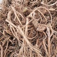 山豆根种植成品
